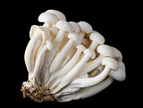 White Beech Mushrooms, Bunapi Shimeji on Black Background