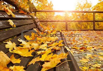 Autumnal landscape with wooden bench