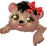 small bear shows