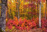 Vivid Fall Foliage