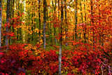 Bold Fall Foliage