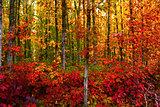 Bold Fall Foliage