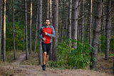 Young Man Running on the Trail in the Wild Pine Forest. Active Lifestyle