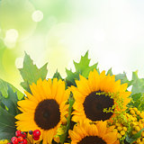 Sunflowers with green leaves