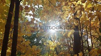 Fall Forest w/ Sun HIGH RESOLUTION