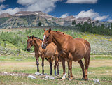 Horses in Wyoming