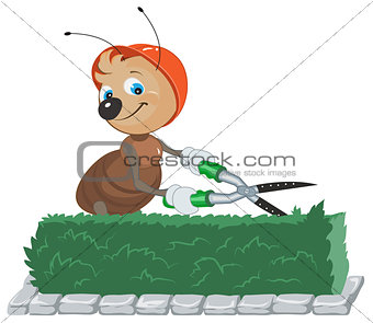 Ant Gardener cuts bush. Gardener with scissors cuts the leaves