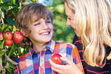Mother Son Woman Boy Child Picking Eating Apple