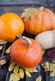 Fresh autumn pumpkins