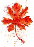 Maple Leaf Painting