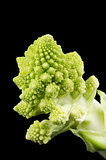 Romanesco Broccoli Floret on Black Background