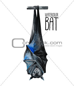 Watercolor sleeping bat