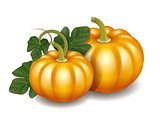 Two orange autumn pumpkins with green leaves