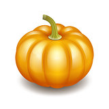 Orange autumn pumpkin icon