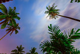 palm trees and colorful sky