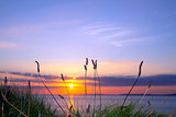 wild tall grass sunset on the wild atlantic way