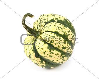 Green and yellow harlequin pumpkin