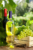 White and red wine bottle, glass, vine and grapes