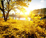 Yellow leaves and river