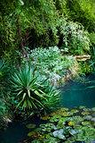 Pond in a garden