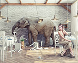 elephant  in  restaurant