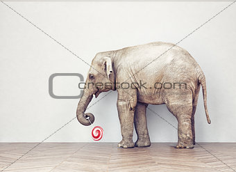 an elephant calm