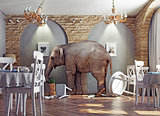an elephant calm in the  restaurant