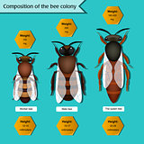 informative poster on the composition of the bee colony