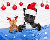 christmas dog with teddy bear sleeping