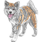 vector sketch dog Akita Inu Japanese breed smiles