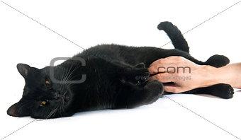 caressing black cat