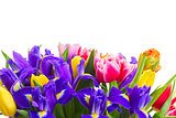 spring tulips and irises