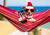 dog on hammock at christmas