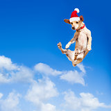 santa claus  jumping dog