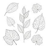 Outline leaves set