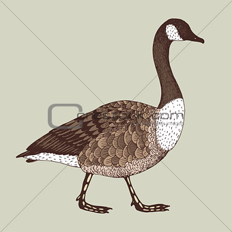 abstract hand drawn vector illustration with a goose