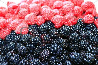 blackberries and raspberry