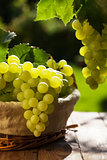 White grapes in basket