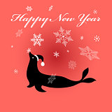 Fur seal on red