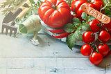 Kitchen garden tomatoes.