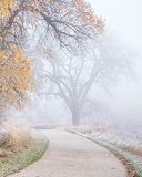 bike trail with fog and frost