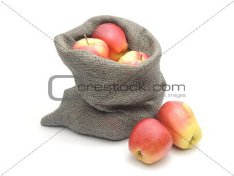 A bag of home-grown ripe apples