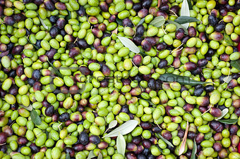a close up of olives, ligurian olives the name is taggiasca