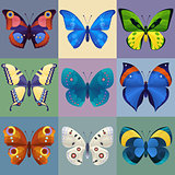 Set of colorful butterflies for design.