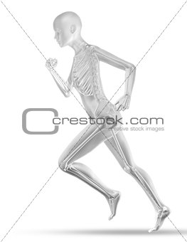 3D female medical figure with skeleton jogging