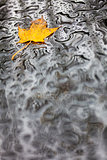 Single Autumn Fall Leaf Rain Wet Weather Background