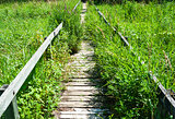 Overgrown long wooden boardwalk