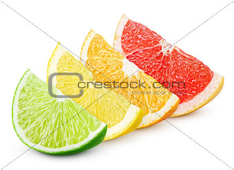 Sliced citrus fruit - lime, lemon, orange and grapefruit