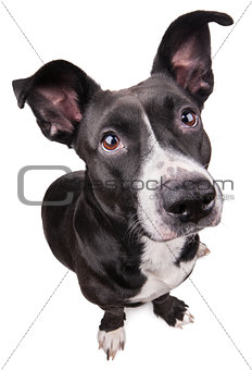 Black cute dog