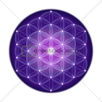 Bright Flower of Life With Stars on White Background